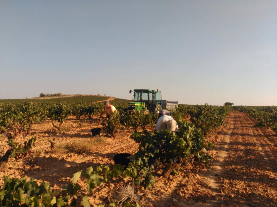 2017´s harvest Diary: an excellent vintage for ViñaVilano