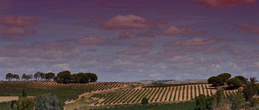 La Ribera del Duero conquista Murcia con Bodegas Vilano
